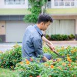 Dịch vụ chăm sóc, duy trì cây xanh đô thị tại Bắc Ninh